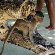 Thailand Monkey Bay
